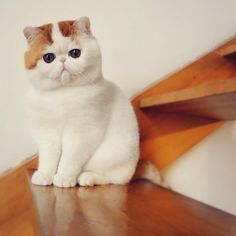 Snoopy. I want this cat!