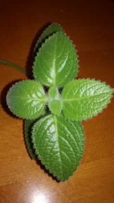 Ale, Diy And Crafts, Plant Leaves, Strawberry, Fruit, Plants, Food, Decor, Syrup