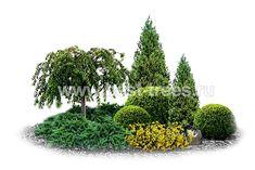 Znaleźliśmy dla Ciebie kilka nowych Pinów na tabli. Evergreen Garden, Garden Trees, Driveway Landscaping, Outdoor Landscaping, Garden Landscape Design, Landscape Plans, Backyard Ideas For Small Yards, Plantation, Garden Planning