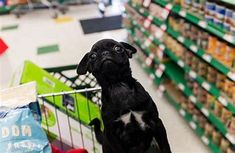 Best Places To Buy For Dog Supplies – Pet Supplies will give you valuable information about pet supplies especially dog supplies. This will also explain to you should buy online instead of buying your local pet supplies stores. Pet Supplies Plus, Online Pet Supplies, Dogs Day Out, Puppy Crate, Cheap Pets, Pet Supply Stores, Dog Clothes Patterns, Hamster, Pet Travel