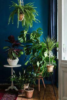 Mix of indoor floor plants