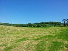 Sunny Whitesheet hill