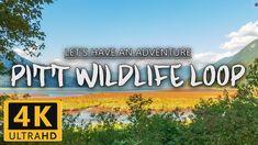 A Marsh Like no Other - Pitt Wildlife Loop https://www.youtube.com/watch?v=SBiaUMedEU0