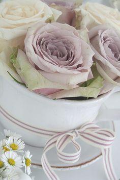 Purple roses my favorite