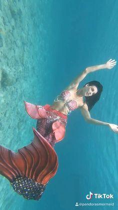 Hire one today! Mermaid Videos, Mermaid Gifs, Mermaid Drawings, Real Mermaids, Mermaids And Mermen, Professional Mermaid, Cute Reptiles, Mermaid Swimming, Cute Wild Animals