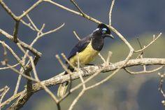 Kappenblaurabe Animals, Santa Cruz, Bolivia, National Forest, Traveling, Animaux, Animal, Animales, Animais
