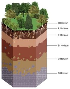 Soil horizons on pinterest organic matter earth science for Soil 5 letters