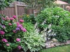 helianthus annuus claret f1 sunflower seeds flower and dark - Garden Ideas North Carolina