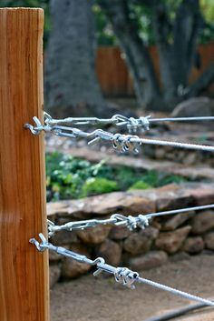 you may remember that I used a wire and turn buckle system to support my grape vines