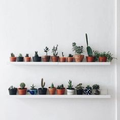 Indoor Plants Beginning with R . Indoor Plants Beginning with R . Indoor Hanging Plant without Drilling A Heavy Duty Tension My New Room, My Room, Deco Cactus, Cactus Decor, Cactus Art, Plant Decor, Deco Nature, Room Goals, Aesthetic Rooms
