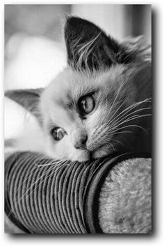 Cute Cats And Kittens, Cool Cats, Kittens Cutest, Black Kittens, Animals And Pets, Baby Animals, Cute Animals, Nature Animals, Wild Animals