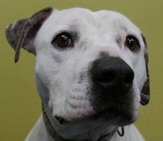 Brownie is available for adoption !  Call us at (858) 676-1600.