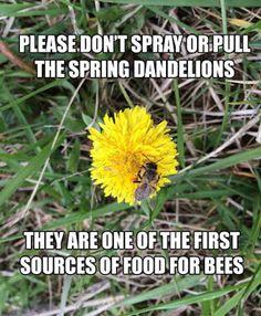 Dragonfly Treasure: Save the Bees