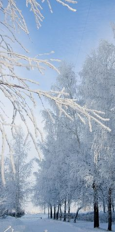 Winter wonderland at Ulyanovsk State Technical University in Ulyanovsk, Russia • photo: Alexander Salmov on Flickr