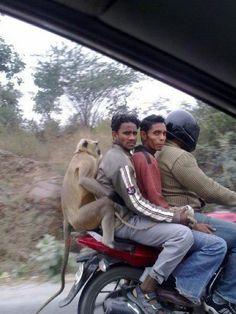 Monkey see... Monkey do ;-)
