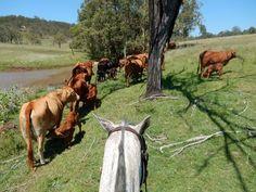Lees mee met de avonturen van Annemiek in Australië!
