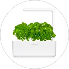 The Click & Grow Smart Indoor Gardens are the most advanced and easiest indoor gardening solutions. Enjoy fresh herbs grown in your own indoor garden all year round. Herbs Indoors, Indoor Gardening, Fresh Herbs, Herb Garden, Gardens, Plants, Herbs Garden, Plant, Tuin