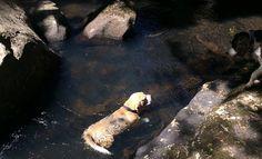 Hogsback - Wolfriver