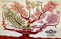 new scaa coffee flavour wheel - Pesquisa Google