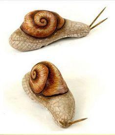 painted rock snails