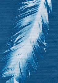 cyanotype by  anna atkins
