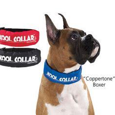 L Kool Collar for Dogs freezable Reusable M S cool safe /& comfortable