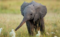 There are not many things in this world capable of being as cute as this baby elephant is as he attempts to make some acquaintances. Description from najampicks.com. I searched for this on bing.com/images