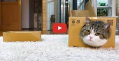 Because Maru Likes Boxes Too Much!