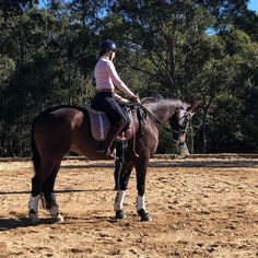 An update on how Nonie and I are getting along in our dressage training Dressage, Ballerina, Equestrian, Training, Horses, Group, Animals, Animais, Animales