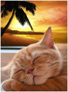 Dreaming of a tropical vacation. I Love Cats, Cool Cats, Good Night Cat, Video Chat, Image Chat, Cat Coloring Page, Super Cute Animals, Beautiful Gif, Sleepy Cat