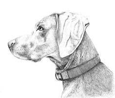 cute dog drawings - Google Search