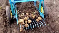мтз-13 копаем картофель картофелекопалкой 2017. Potato Harvester, Farm Life, Wood Projects, Tractors, Garden Tools, Diy And Crafts, Vegetables, Atv, Farming