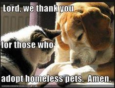 Aww love it! pet adoption