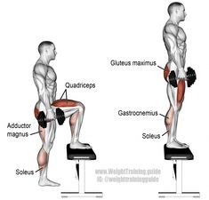 Dumbbell step up. A compound push exercise great for developing unilateral leg strength. Muscle worked: Quadriceps Gluteus Maximus Adductor Magnus Soleus Gastrocnemius and Hamstrings. Fitness Workouts, Lifting Workouts, Butt Workouts, Workout Routines, Weight Training, Weight Lifting, Step Up Workout, Step Ups Exercise, Men Exercise