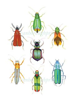 Entomology Wall Art Print Beetles Insects Bugs Drawing Painting Print and Posters Home Decor Wall Art