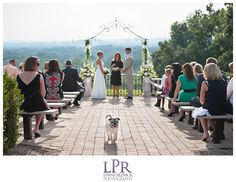 Photography by Lynne Reznick Photography / pug in bow tie / wedding