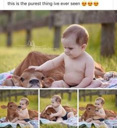 39 Ideas Funny Photos Ideas For Friends Kids For 2019 Animals For Kids, Cute Baby Animals, Funny Animals, Wild Animals, Cow Pictures, Cute Baby Pictures, Western Baby Pictures, Funny Babies, Cute Babies