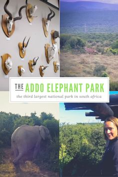 How about a drive into the Addo Elephant National Park, one of the largest in…