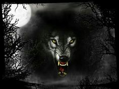 Lobo bosque