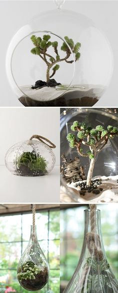 Noted, AVL: hanging terrariums