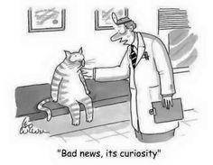 """Bad news, it's curiosity."""