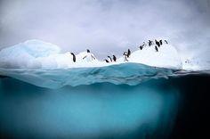 Antarctic+photos+tumblr | ... | Art and Design Blog: Antarctic Wildlife: Photos by Justin Hofman
