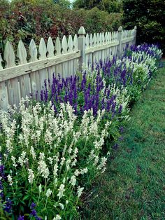 Hamptons Garden Landscaping Salvias, also called sages, are easy to grow, bloom abundantly, and great looking in the landscape. Use this guide to find the best types of salvia for your garden. Small Cottage Garden Ideas, Garden Cottage, Garden Bar, Front House Garden Ideas, Td Garden, Tuscan Garden, Sunken Garden, Sloped Garden, Gravel Garden