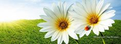 Ladybug Flower Facebook Covers