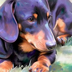 Inexpensive Dog Groomers Near Me Baby Puppies, Baby Dogs, Pet Dogs, Pets, Doggies, Arte Dachshund, Dachshund Love, Animal Sketches, Animal Drawings