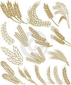 Wheat vector by Sash77, via Dreamstime                                                                                                                                                                                 Mais