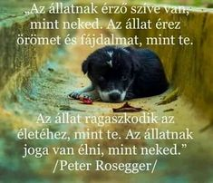 Peter Rosegger, Word 2, Mountain Dogs, Dog Quotes, Beagle, Dog Love, Dogs And Puppies, Labrador, Pets