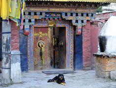 Tibetan Mastiff guarding Ganden Cholung  main entrance doors