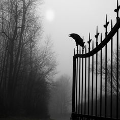View top-quality stock photos of Graveyard Guardian. Find premium, high-resolution stock photography at Getty Images. Damon Salvatore, Dracula, Vampire Diaries, Slytherin, Hogwarts, Most Haunted Places, Gothic Aesthetic, Mystic Falls, Paranormal Romance