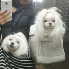 """""""1/28 오늘도 어김없이 엘베샷 . 이따집가서 인스타욜씨미할께융 . . #독스타그램 #펫스타그램 #말티즈 #개엄마 #개덕후 #귀요미#인스타독 #강아지 #반려견  #petstagarm #puppy #pet #maltese #dog #dogstagram#cuty #lovely…"""""""